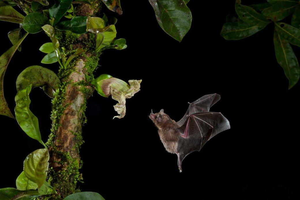 Хэллоуин еще некончился: лучшие фотографии летучих мышей отNatGeo - Изображение 13
