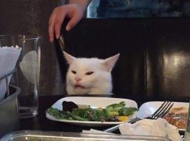 Комикс про кота-главный мем года получил неожиданное завершение