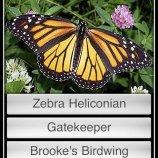 Скриншот Butterflies! – Изображение 1