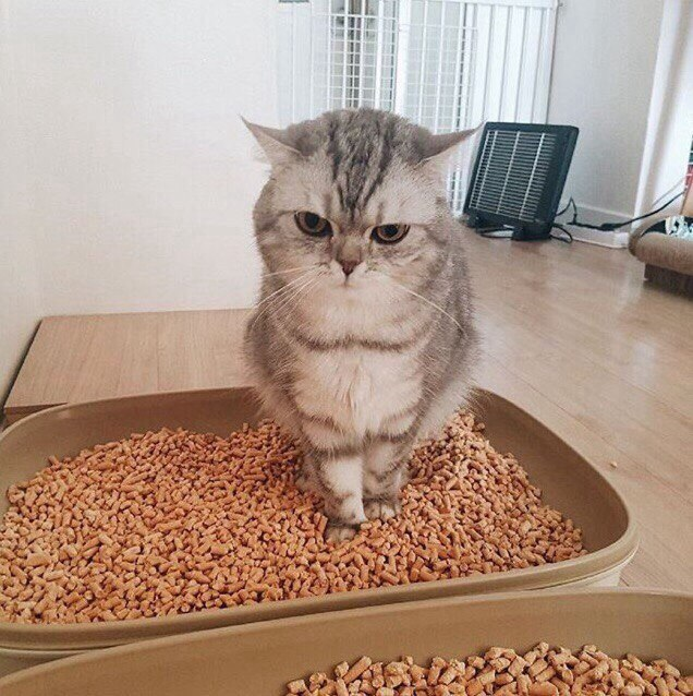 Ненависть, грусть, безысходность и коты. Вспоминаем самые забавные фотографии ко дню кошек!. - Изображение 13