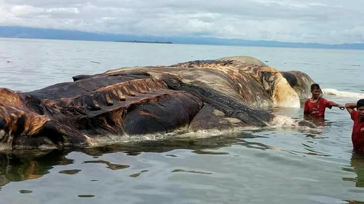 Что запокемон? Туша огромного морского животного пугает индонезийцев   Канобу - Изображение 2