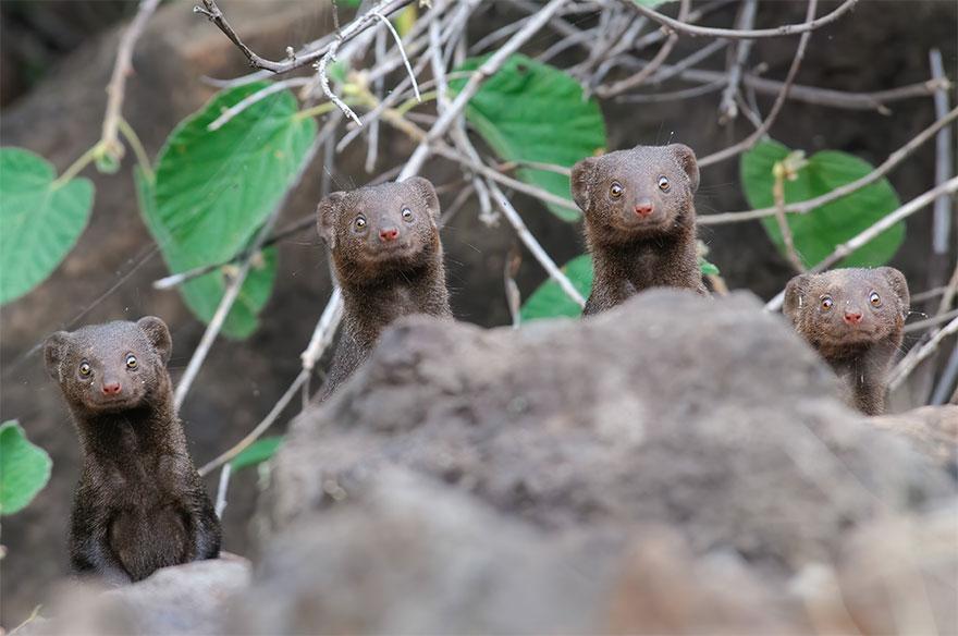 Позитивная галерея: 40 фото сконкурса насамый смешной снимок дикой природы   Канобу - Изображение 3976